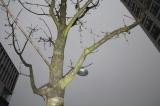 Wir schmücken mit Euch einenWeihnachtsbaum!